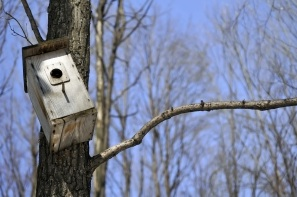 Bird house in trees